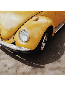 yellow-bug