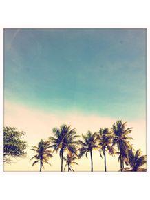 palmtrees-green