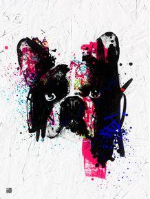 street-bulldog