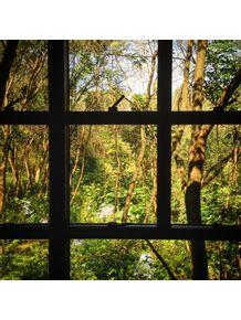 fresta-floresta-pela-janela