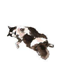 watercolor-cat-gato-aquarela