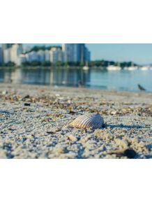 conchas-de-botafogo