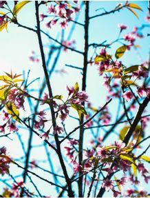 sempre-primavera