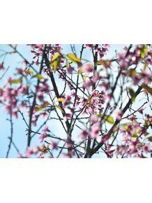 sempre-primavera-ii