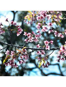 sempre-primavera-iii