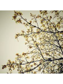 floral-monocratica