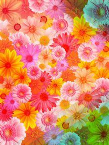 morning-flower
