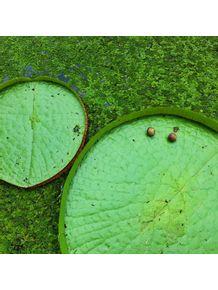 natureza-viva-ix