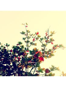natureza-viva-iii