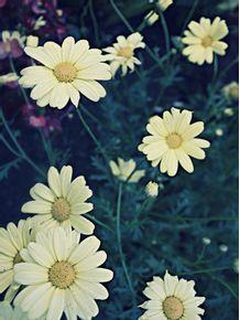 flowers-polaroid