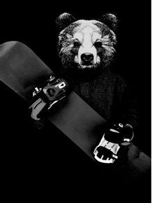 snowboard-bear