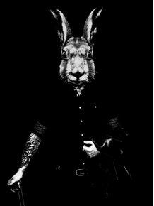 magic-rabbit