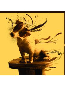 dog-jack-russell-terrier-iii
