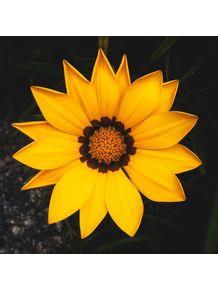 flor-sol-amarelo