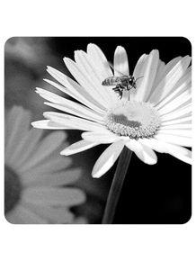 abelha-sobre-a-margarida-77
