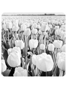 flores-tulipas-da-holanda-251