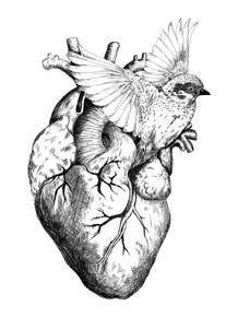o-amor-te-da-asas