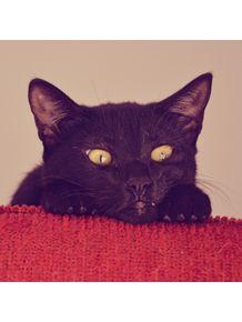 quadro-o-negro-gato
