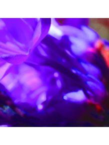 quadro-blur-blue-flower