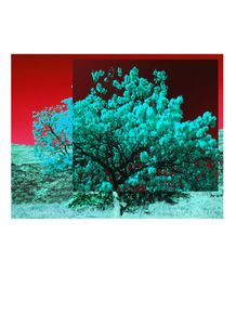 quadro-white-flies-with-red-sky