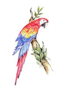 quadro-arara-vermelha-ara-macao