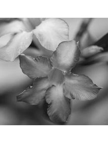 quadro-flores-07