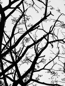 quadro-natureza-01