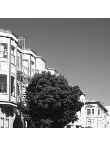 quadro-urban-tree