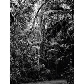 quadro-floresta-urbana--sao-paulo--arvores