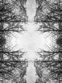 quadro-arvores-mirror-madness-trees