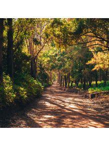 quadro-luz-e-sombras-no-bosque