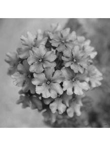 quadro-flores-20
