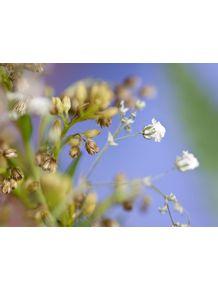 quadro-mini-flor