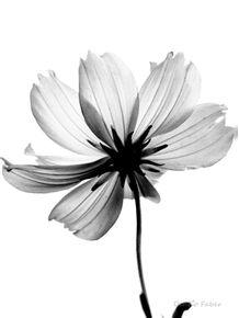 quadro-fleur-translucide