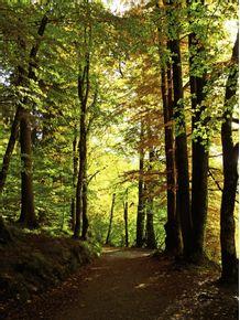 quadro-alemanha-floresta
