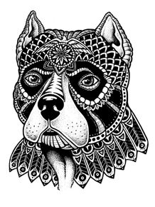 quadro-pitbull