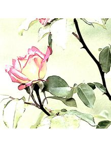 quadro-rosa-suave