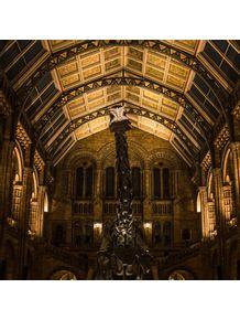 quadro-natural-history-museum--the-dino