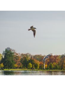 quadro-flying-in-the-lake