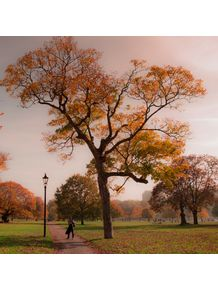 quadro-the-tree-of-hyde-park