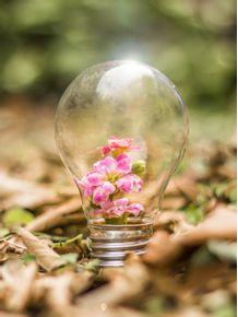 quadro-lampada-de-flores