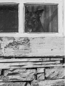 quadro-espera-na-janela
