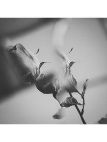 quadro-mirror-rose