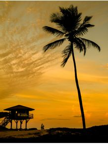 quadro-tropical-sunset