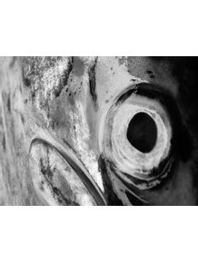 quadro-salmon