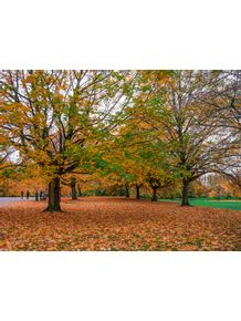 quadro-hyde-autumn-leaves