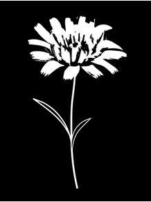 quadro-white-flower