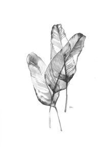 quadro-da-nossa-flora-iii