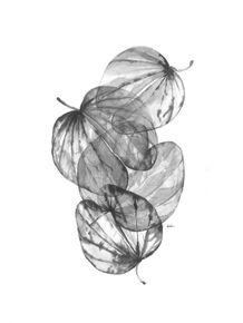 quadro-da-nossa-flora-iiii