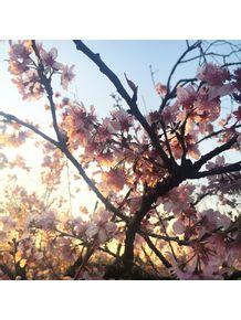 quadro-sakuras